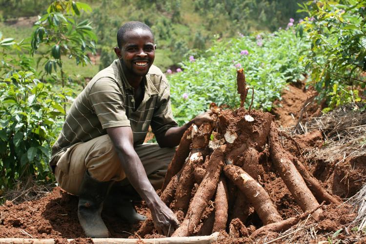 Cassava-Farming-in-Ghana-1